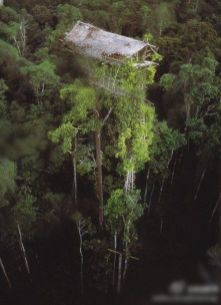 Maybe I need to make a _treehouses_ pin board...wish I knew where this was.