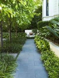 Pyrus sp. with Spathiphyllum sp. _ by William Dangar & Associates