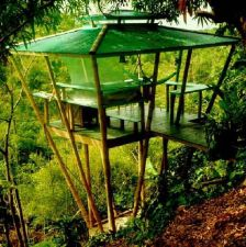 THE CLIFF_SIDE TREE HOUSE