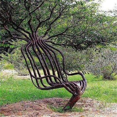 Wow... This tree is out of this world_ Imagine reading a book while sitting on it. _garden _tree _bonsai _unique _