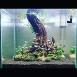 Fish_Tank (16)