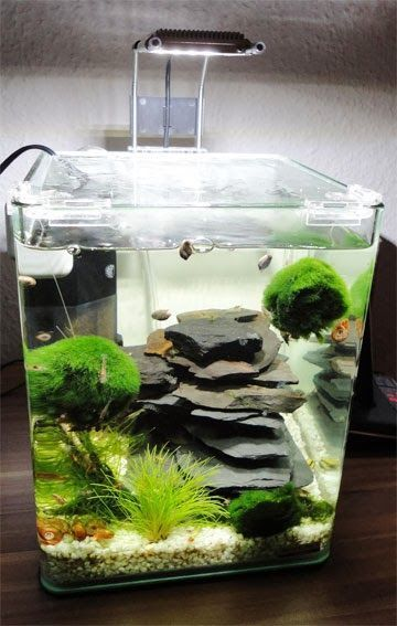Fish_Tank (17)