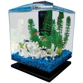 Fish_Tank (20)