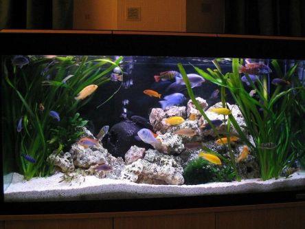 Fish_Tank (21)