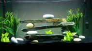 Fish_Tank (27)
