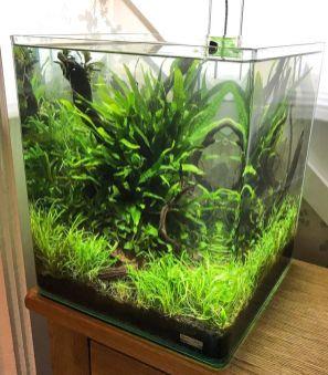 Fish_Tank (28)