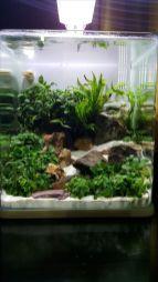 Fish_Tank (31)