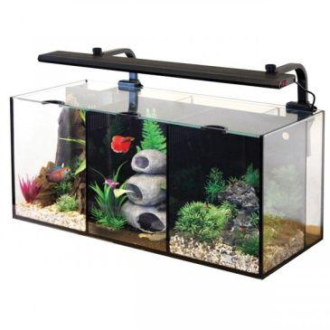 Fish_Tank (32)