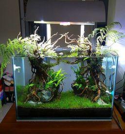 Fish_Tank (39)