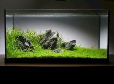 Fish_Tank (43)