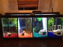 Fish_Tank (47)