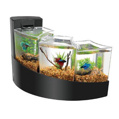 Fish_Tank (50)