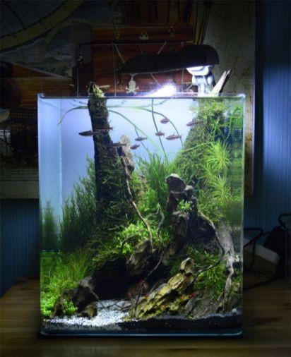 Fish_Tank (51)