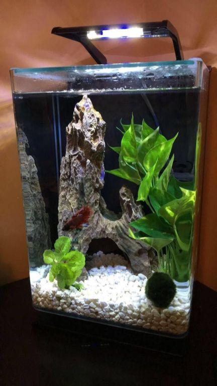 Fish_Tank (6)