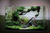 Fish_Tank (61)