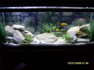 Fish_Tank (68)