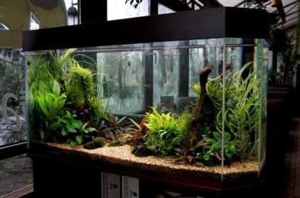 Fish_Tank (72)