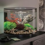 Fish_Tank (73)