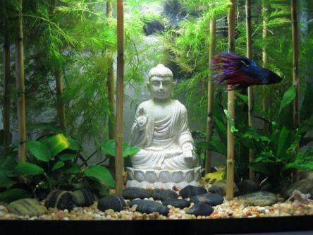 Fish_Tank (8)