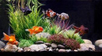 Fish_Tank (85)