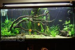 Fish_Tank (86)