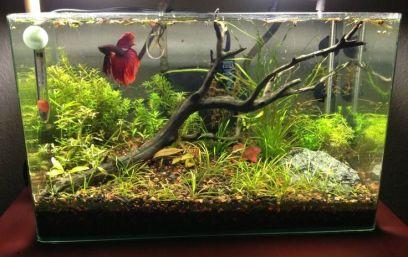 Fish_Tank (90)