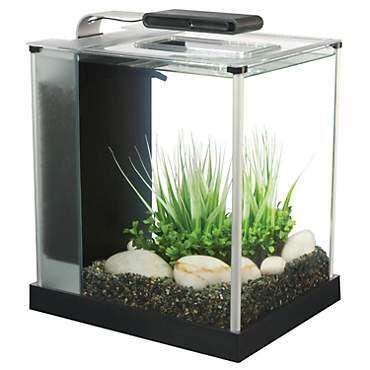 Fish_Tank (93)