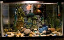 Fish_Tank (96)