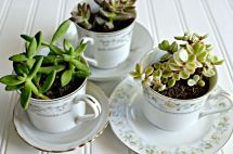 Tea-cups-used-like-succulents-for-plants