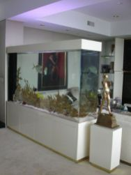 a-large-aquarium-is-a-space-divider-and-a-decor-feature-looks-bold-and-cool-and-will-add-to-the-decor-of-the-space