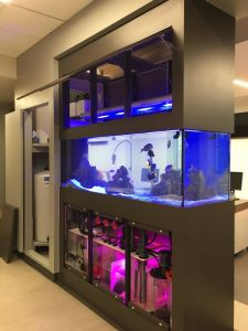 a-minimalist-space-divider-with-some-storage-compartments-and-an-aquarium-is-a-very-stylish-space-divider