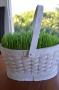 a-white-basket-with-wheatgrass-is-a-truly-spring-or-Easter-decoration-to-rock