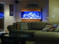 aquariums-in-interiors-2-554x415