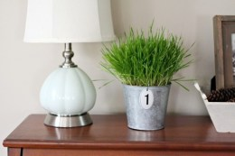 fresh-wheatgrass-decor-ideas-to-try-in-spring-20-554x369