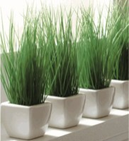 fresh-wheatgrass-decor-ideas-to-try-in-spring-25