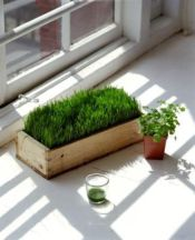 fresh-wheatgrass-decor-ideas-to-try-in-spring-3