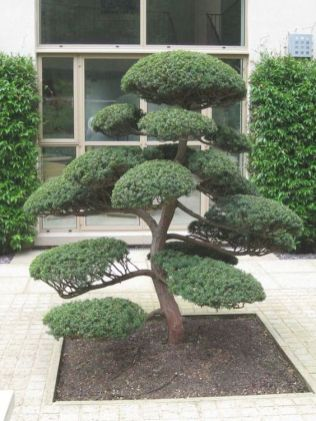 greenery-walls-a-statement-Japanese-style-tree-in-front-of-the-entrance-make-up-a-chic-Japanese-front-yard