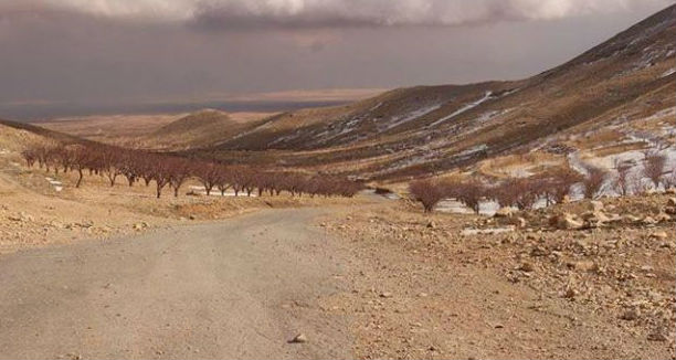 Arsal barrens