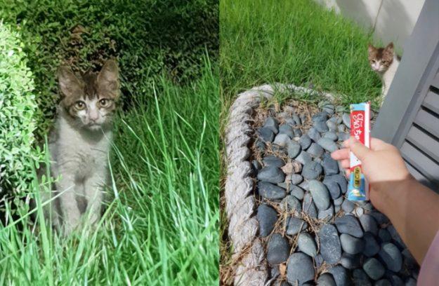 Avoiding Cat-Astrophe: Saving a Kitten in Samsung's Digital City