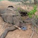 Bear, elephant found dead in Tamil Nadu's Mudumalai Tiger Reserve, probe on 💥😭😭💥