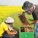 26910-kg honey collected in Jamalpur