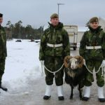 Amid worries over Russia, Sweden returns troops to Baltic island