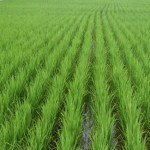 ERD inks deals with FAO to strengthen technical capacity in agriculture sector