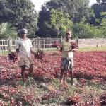 Rajshahi attains success in winter vegetable farming