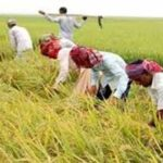 Agri Ministry for easing movement of labourers to harvest paddy
