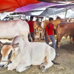 Ban cattle, meat imports from India, Myanmar: Traders