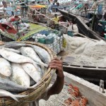Hilsa catching banned: 10,566 tons of rice for fishermen allocated