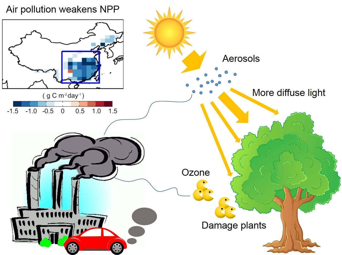 Ozone And Haze Pollution Weakens Land Carbon Uptake In