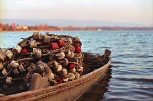 דיג - הפורום הישראלי לתזונה בת קיימא