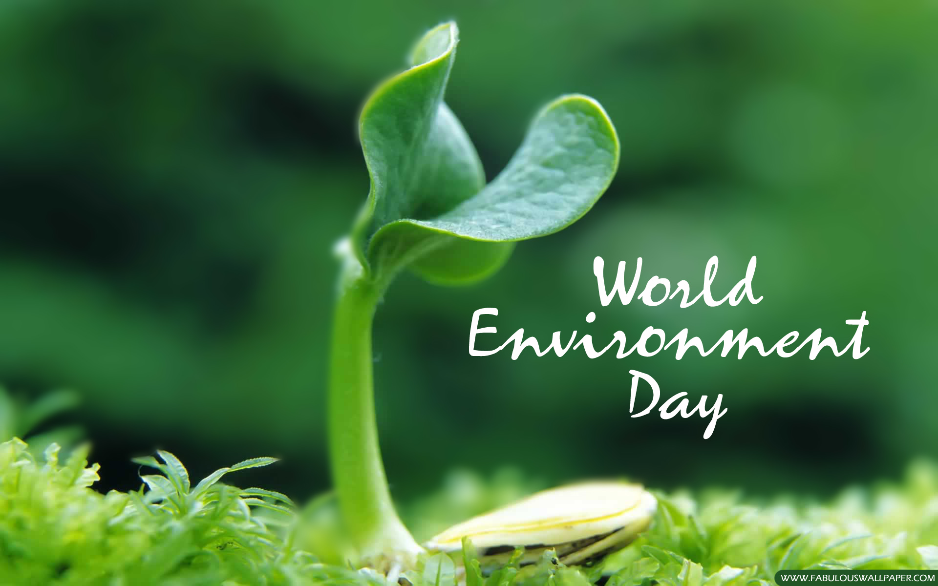 World Environment Day June 5th